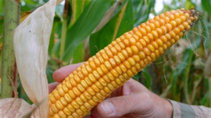 Une pétition pour faire de la Gaspésie un territoire sans organisme génétiquement modifié (OGM)