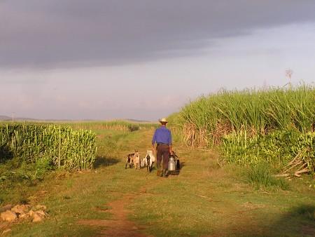 Formation et rencontre internationale d'Agroécologie à Cuba en novembre 2015