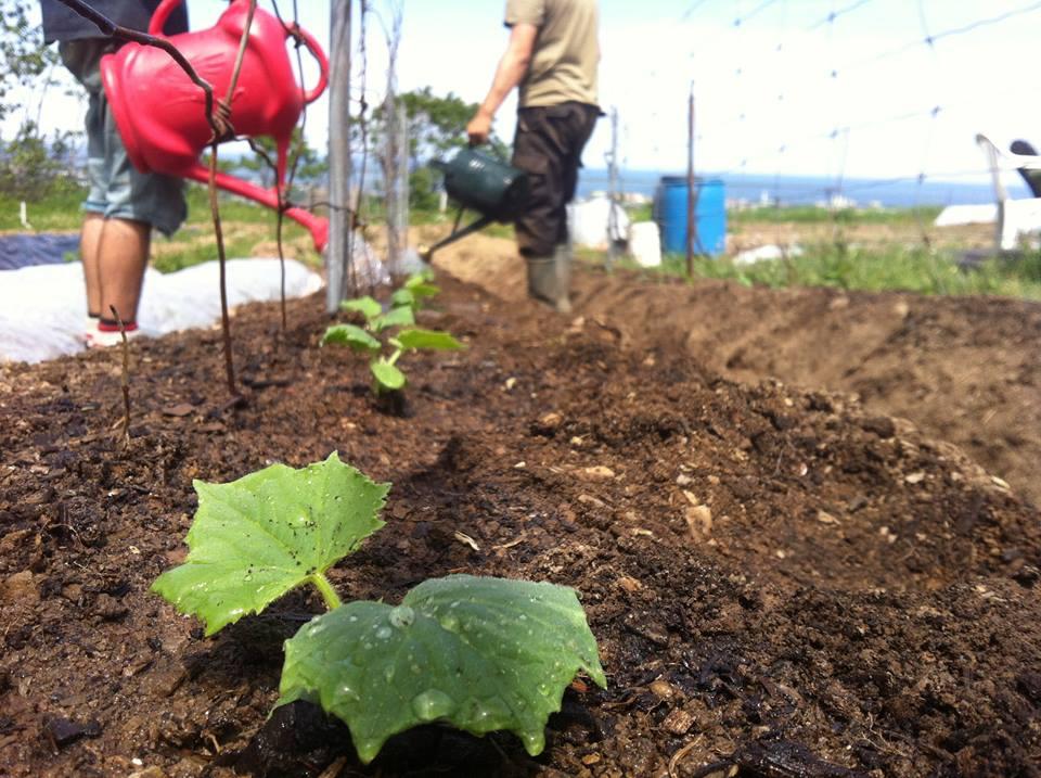 agroécologie paysanne au Québec